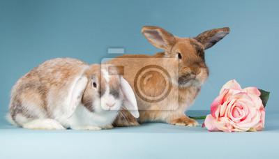 Zwei Mini lop Kaninchen mit Rose
