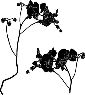 Sticker Zwei Orchidee Zweige Skizzen auf weiß