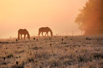 Zwei Pferde auf wunderbare Herbst Wiese bei ruhigen Morgen Sonnenaufgang in der Nähe von farbigen nebligen Wald im November