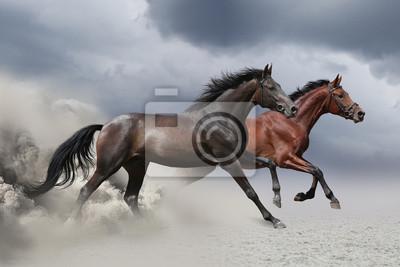 Zwei Pferde laufen im Galopp entlang der Sandfeld