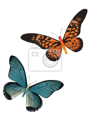 zwei Schmetterlinge orange und blaue Farbe auf weißem